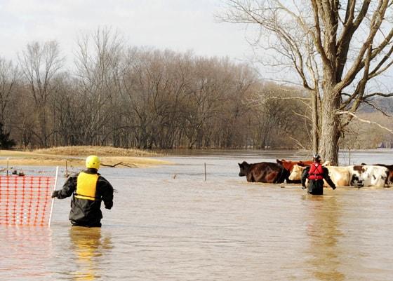 dive rescue international animal rescue